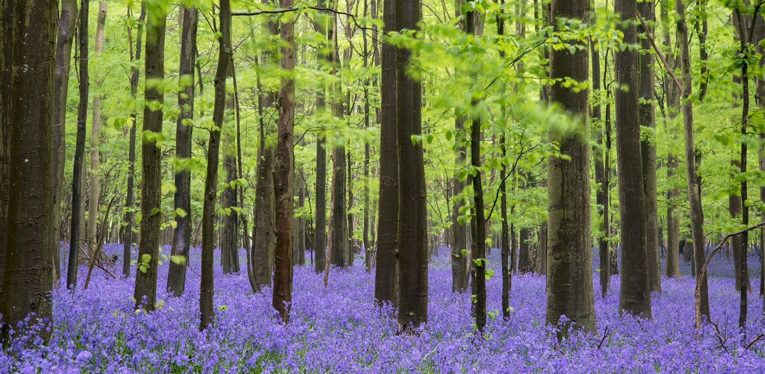 It's all about... our fabulous forests and wonderful woodlands Part 2