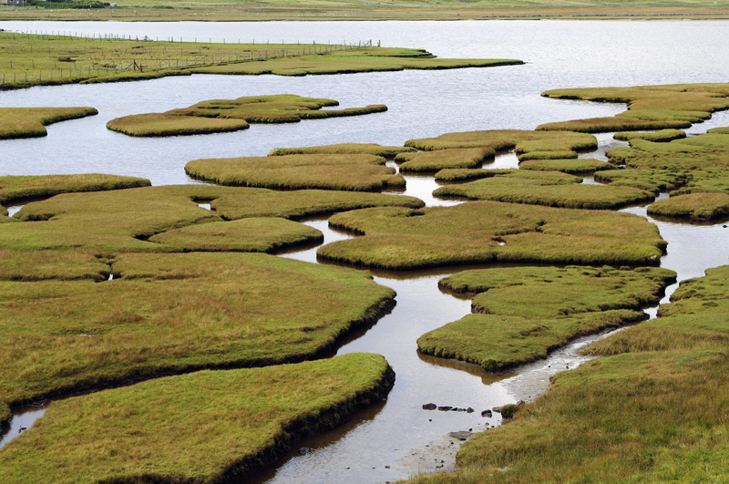 Wetlands | Scotland's environment web