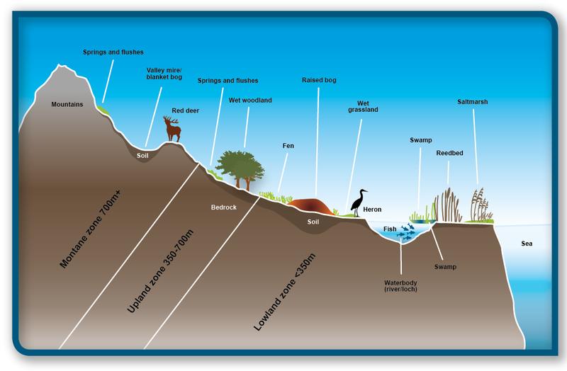 Wetlands   Scotland's environment web